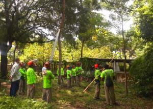 Grupo de homens fardados de verde e portando equipamentos de poda verificam árvore para poda